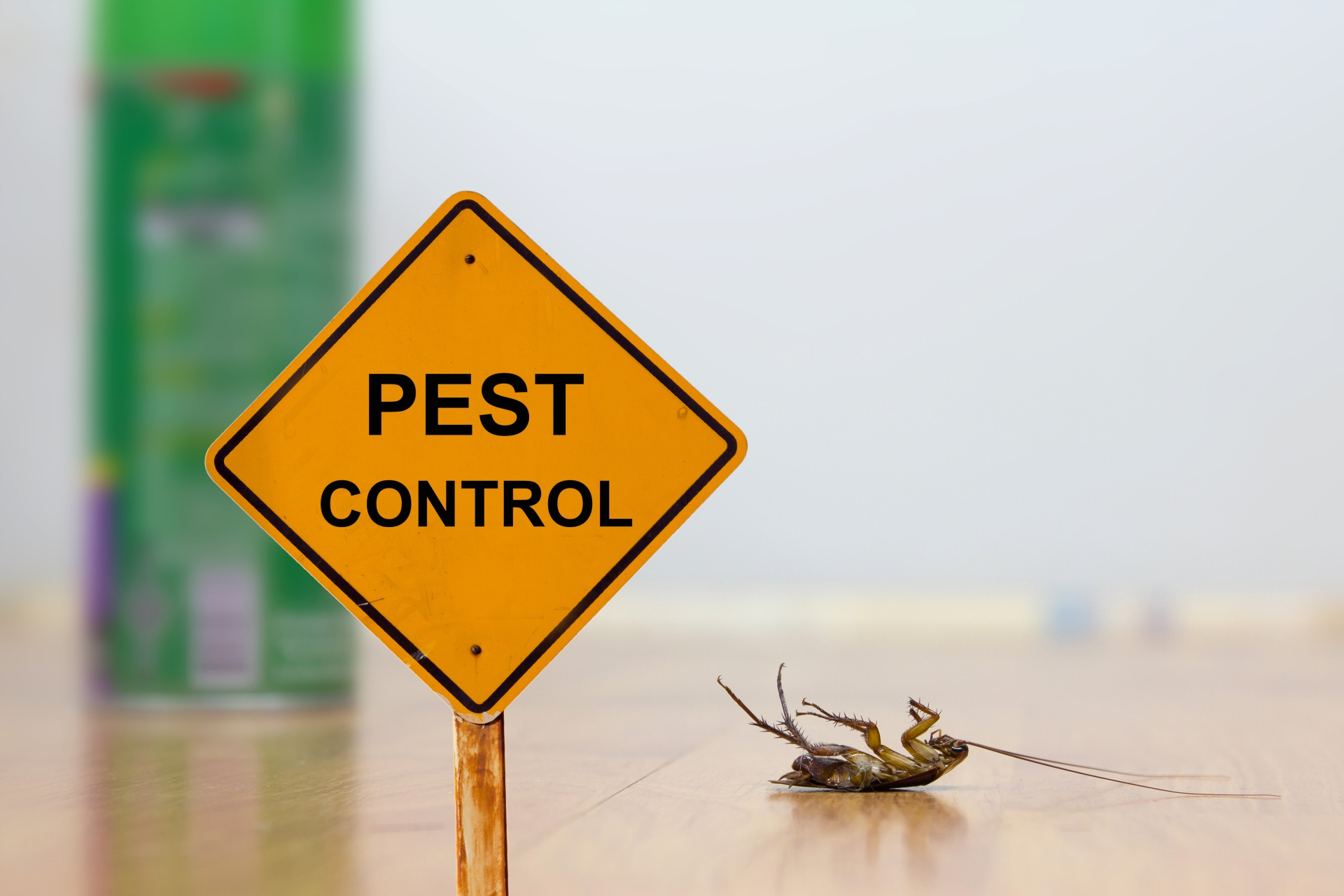 24 Hour Pest Control, Pest Control in Broxbourne, EN10. Call Now 020 8166 9746
