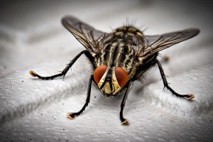 Insect Control, Pest Control in Broxbourne, EN10. Call Now 020 8166 9746